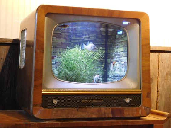 Fernseher-Freigeber-Christoph-Konitzer-pixelio